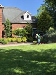 mosquito-and-tick-spray